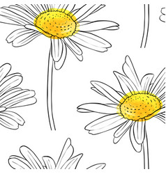 Seamless pattern with flower of daisy vector
