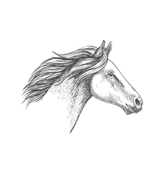 White horse pencil sketch portrait vector