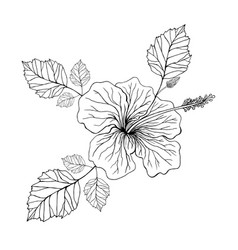 flower hibiscus coloring page vector image