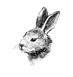 Hand drawn rabbit on white vector image