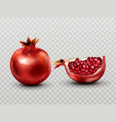 pomegranate whole and slice with seeds isolated vector image