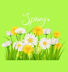 Spring daisies chamomiles dandelions juicy green vector