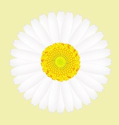 White daisy flower isolated on yellow background vector image