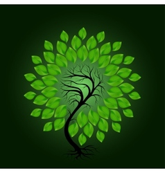 Tree with green leafage on dark green background vector image