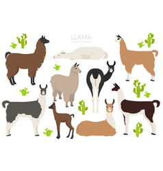 Camelids family collection llama graphic design vector