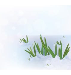 Grass snow vector