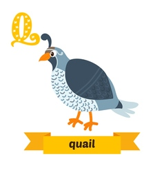 Quail Q letter Cute children animal alphabet in vector image