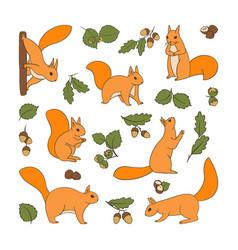 Set cartoon cute squirrels with acorns vector