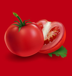 tomatoes on a red background vector image