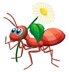 Ant holding daisy flower vector