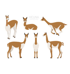 Camelids family collection vicuna graphic design vector