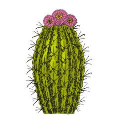 Home cactus plants or flower cozy cute element vector