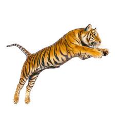 tiger jumping hand draw vector image