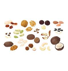 Cartoon nuts almond peanut walnut hazelnut vector