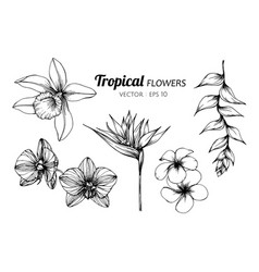 Collection set of tropical flower drawing vector