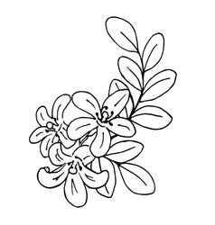 Doodle bergamot flowers with leaves black outline vector
