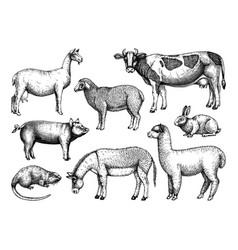 Hand-sketched farm animals cow lama donk vector