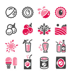 lychee icon set vector image