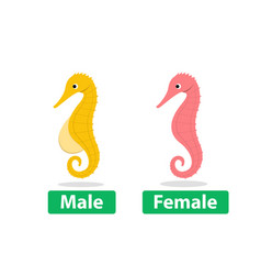 side view male and female seahorse cartoon vector image