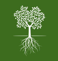White trees with roots on green background vector