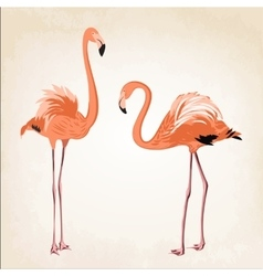 Beautiful pink flamingo birds vintage background vector image