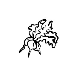 bunch of radish grunge icon vector image