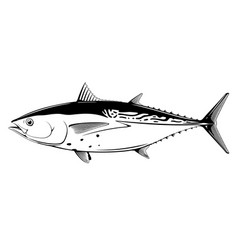 little tunny fish black and white vector image