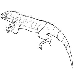 Lizard is goanna silhouette on a white background vector