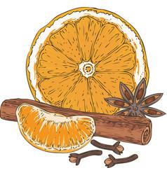 Orange slice tangerine spices vector
