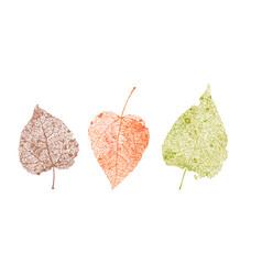 Set of skeletons leaves fallen foliage for autumn vector