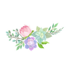 Succulent echeveria floral arrangements set vector