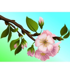 Apple-tree branch with flowers vector