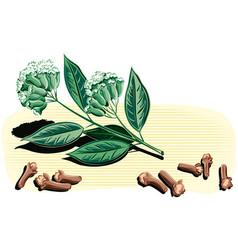 Branch of cloves vector
