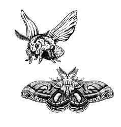 Hand drawn set moth realistic sketches vector