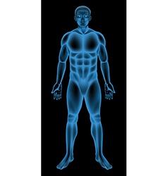 Male body vector