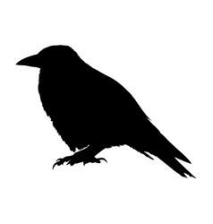 Raven silhouette isolated on white background vector
