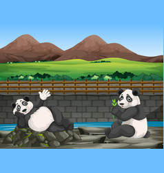 scene with two pandas at zoo vector image