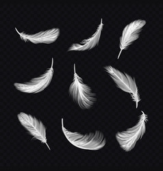 set isolated white bird feather on transparent vector image