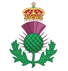 Thistle symbol of scotland vector