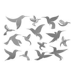 Icons of colibri humming bird vector