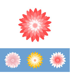 chrysanthemum or gerber daisy flower vector image