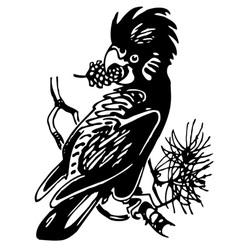 Cockatoo bird vector
