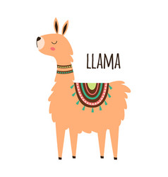cute llama isolated on white vector image