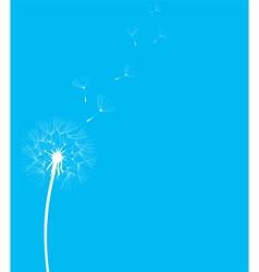 dandelion blue vector image