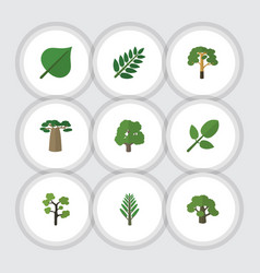 Flat icon natural set of wood acacia leaf garden vector