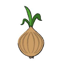 garlic food draw vector image
