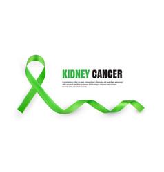 green kidney cancer awareness symbolic ribbon vector image