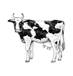 hand drawn cow farm animal vector image