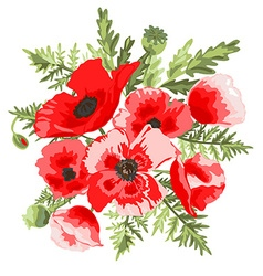 Poppies floral bouquet vector