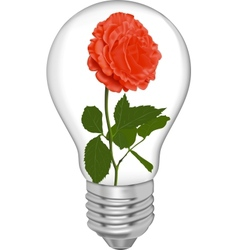 Red rose in a bulb vector image